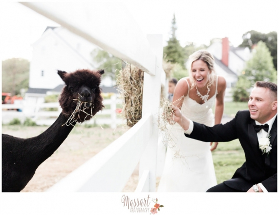 Photo of bride and groom feeding animals at Five Bridge Inn in Massachusetts captured by Massart Photography of Warwick Rhode Island