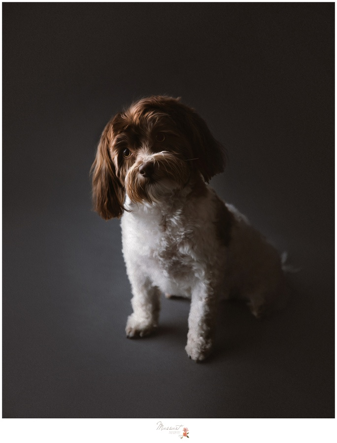 Black dramatic background featuring a puppy photographed by Massart Photography located in Warwick, Rhode Island
